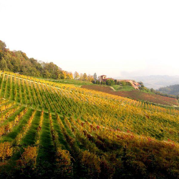 consorzio vino casalese (1)