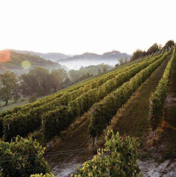 consorzio vino casalese (2)