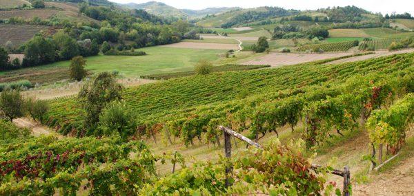 consorzio vino casalese (3)